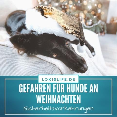 Gefahren für Hunde an Weihnachten: Darauf sollten Hundehalter achten, damit die Feiertage nicht beim Tierarzt enden