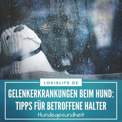 Gelenkerkrankungen beim Hund: Tipps für betroffene Halter