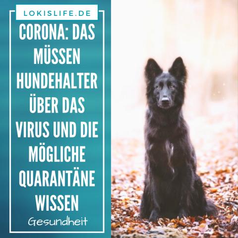 Corona: Das müssen Hundehalter über das Virus und die mögliche Quarantäne wissen