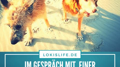 Interview: Im Gespräch mit Tierkommunikatorin Nicole Grützbach