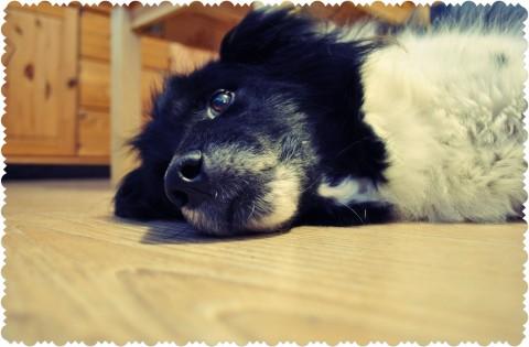 Because of my dog Bobby I am…