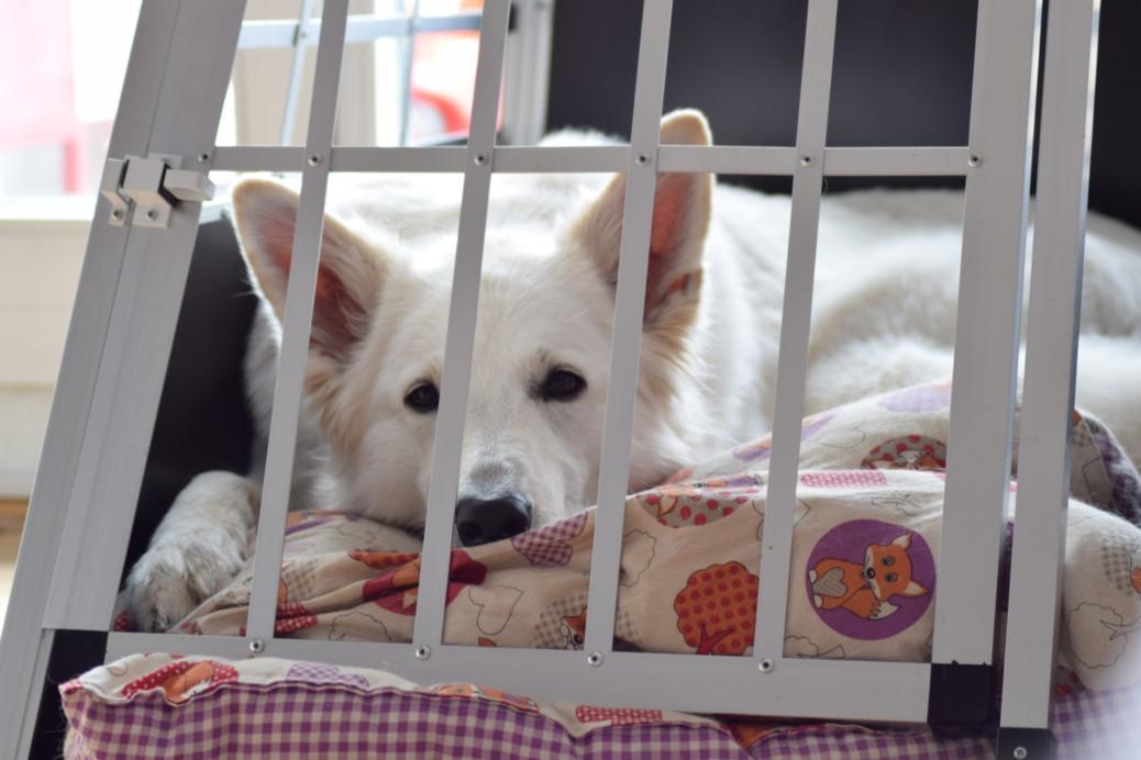 Boxtraining Hund