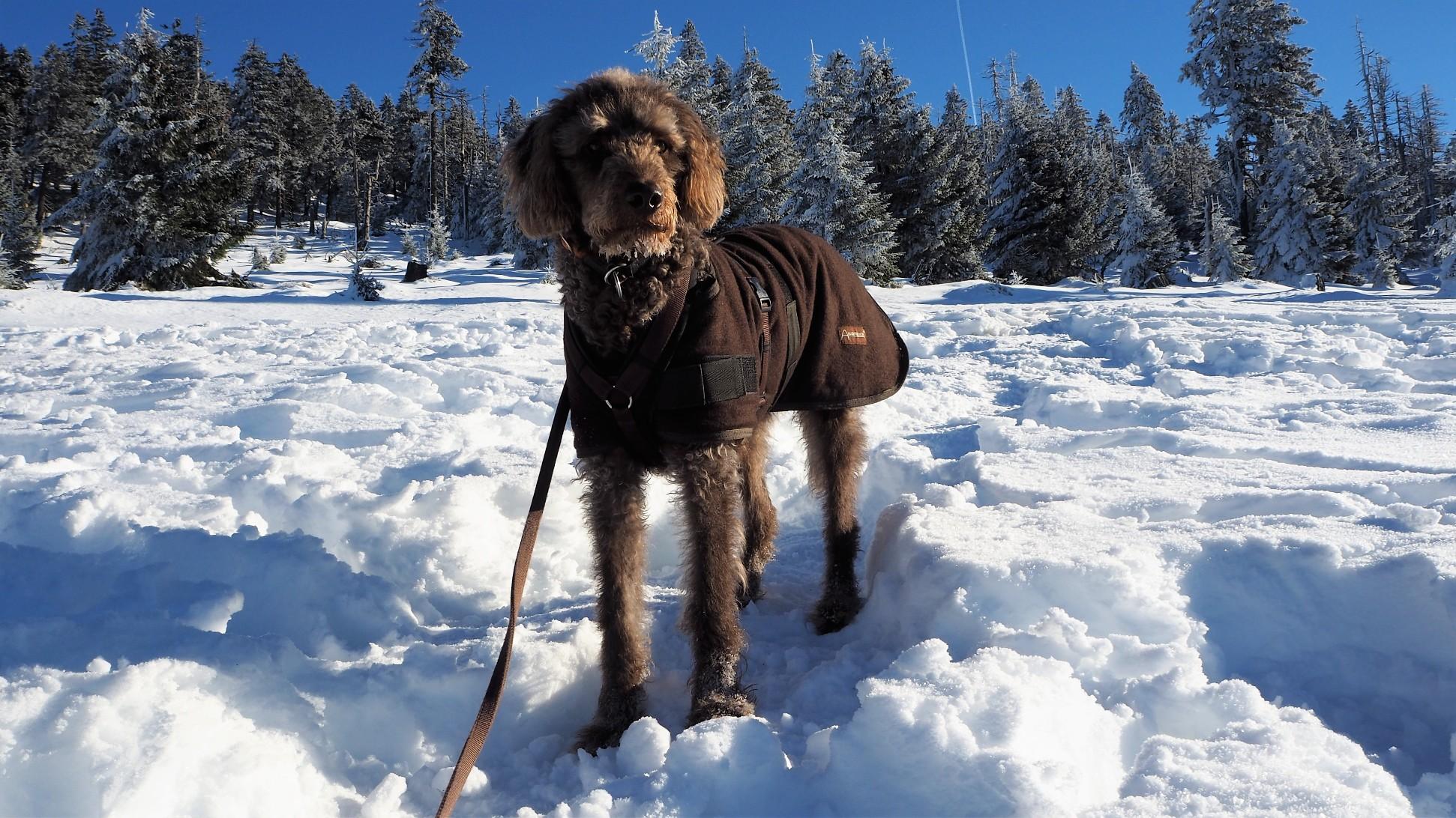 Brocken im Winter 10