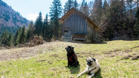 Wandern in Buchenegg