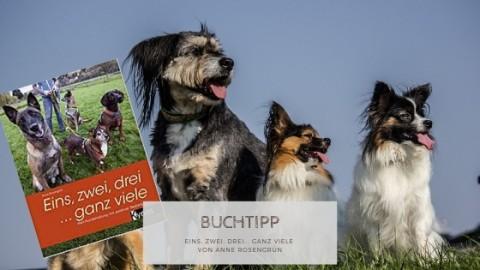 """Buchtipp: """"Eins, zwei, drei… ganz viele – Mehrhundehaltung mit positiver Bestärkung"""" von Anne Rosengrün"""