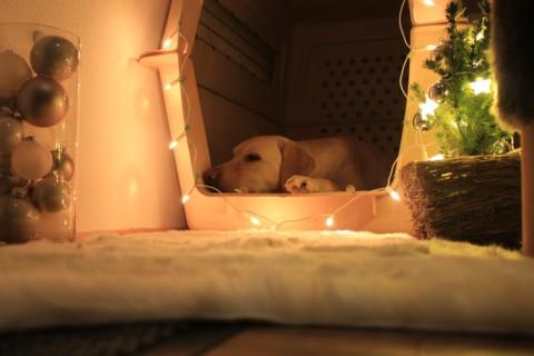 Gummibesen, 2,5x am Tag oder Hundehaus, welch ein Graus