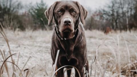 Tipps für das Fotoshooting mit Hund