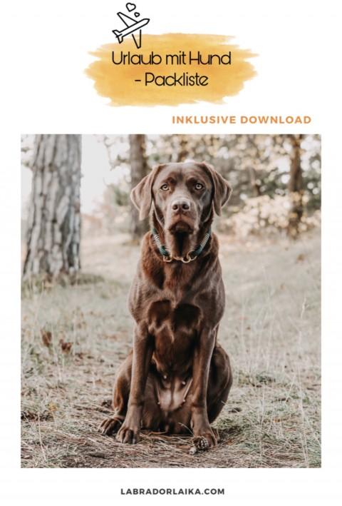 Packliste für den Hundeurlaub