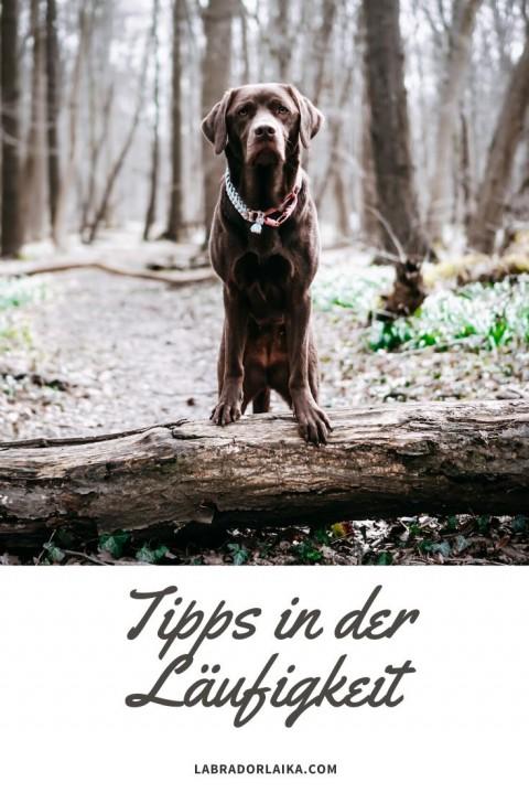 Tipps für die Läufigkeit
