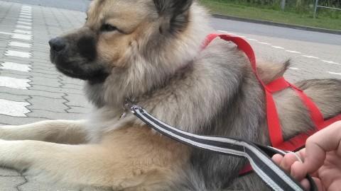 Nina liest – 'Zughundetraining Expertenwissen Hundeausbildung'