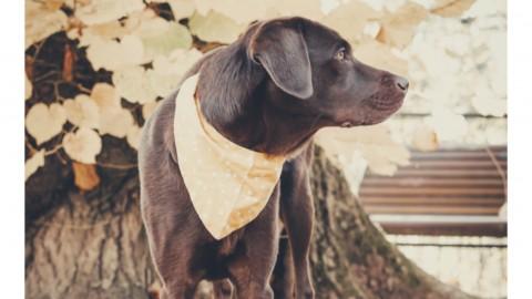 Hausapotheke für Hunde und Erste Hilfe Set für Hunde