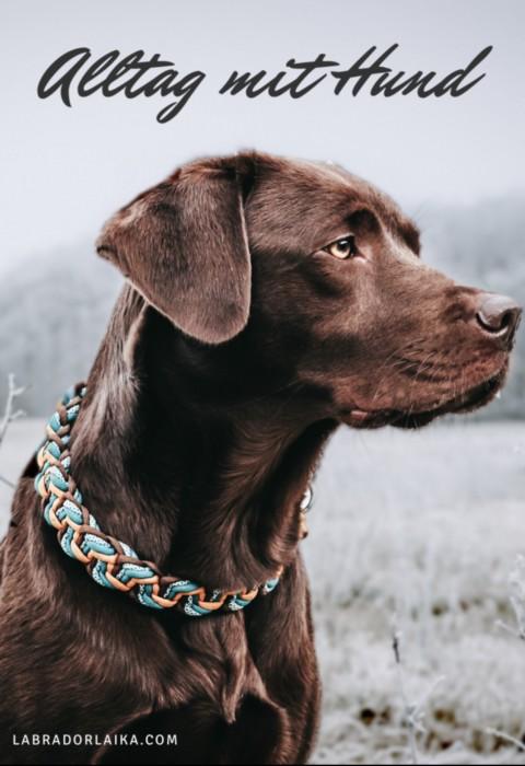 Tagesablauf mit einem Hund