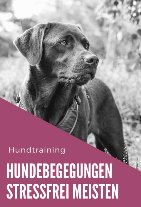 Hundebegegnungen stressfrei meistern