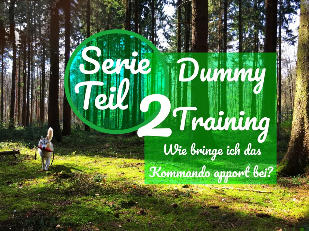 Dummy Training Apport
