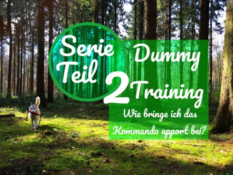 Serie Dummy Training Teil 2