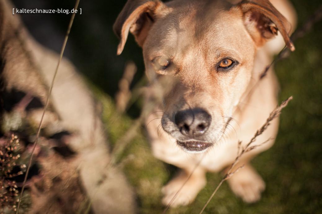 Kamera verstehen Tipps Hund