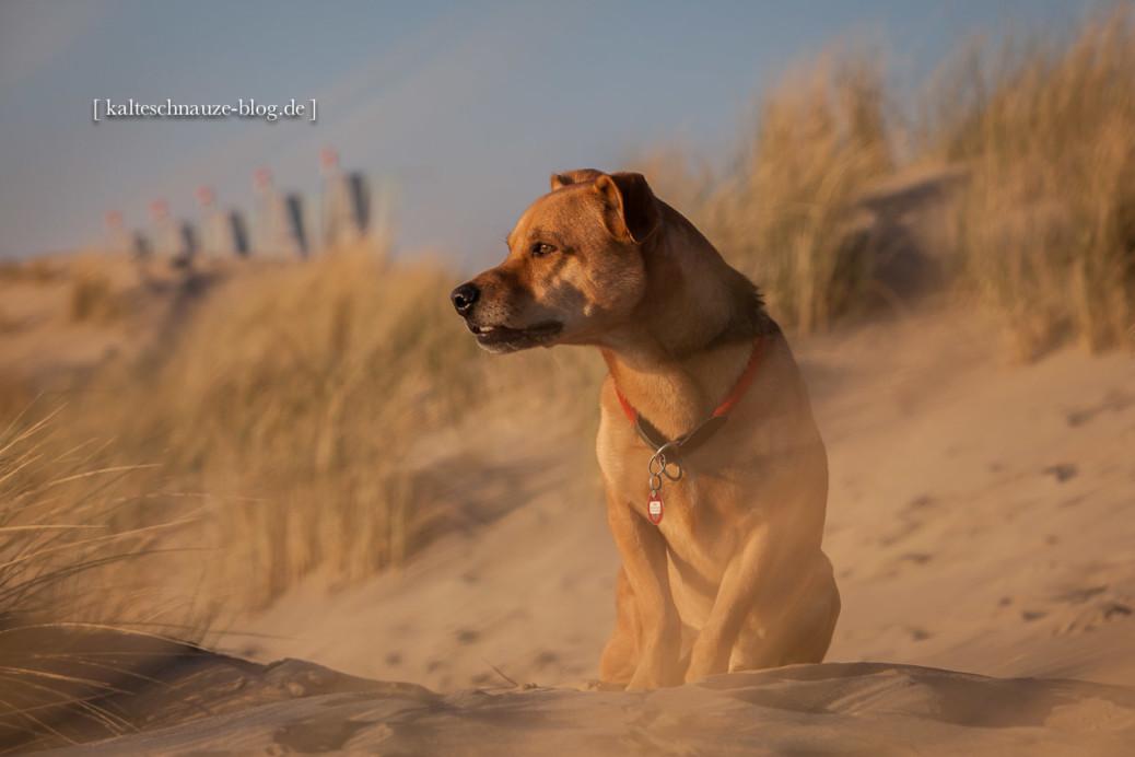Tipps für bessere Fotos Hund