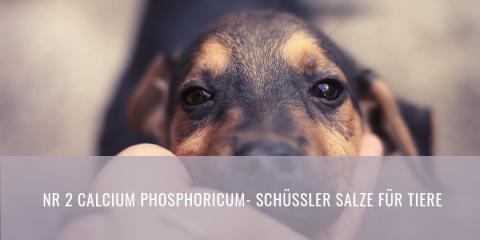 Schüssler Salze für Tiere | Calcium Phosphoricum