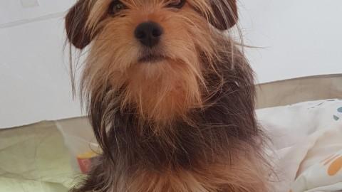Camping mit Hund – (K)Ein Problem?!