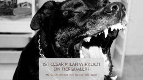 Cesar Milan – Hundeflüsterer oder Tierquäler?