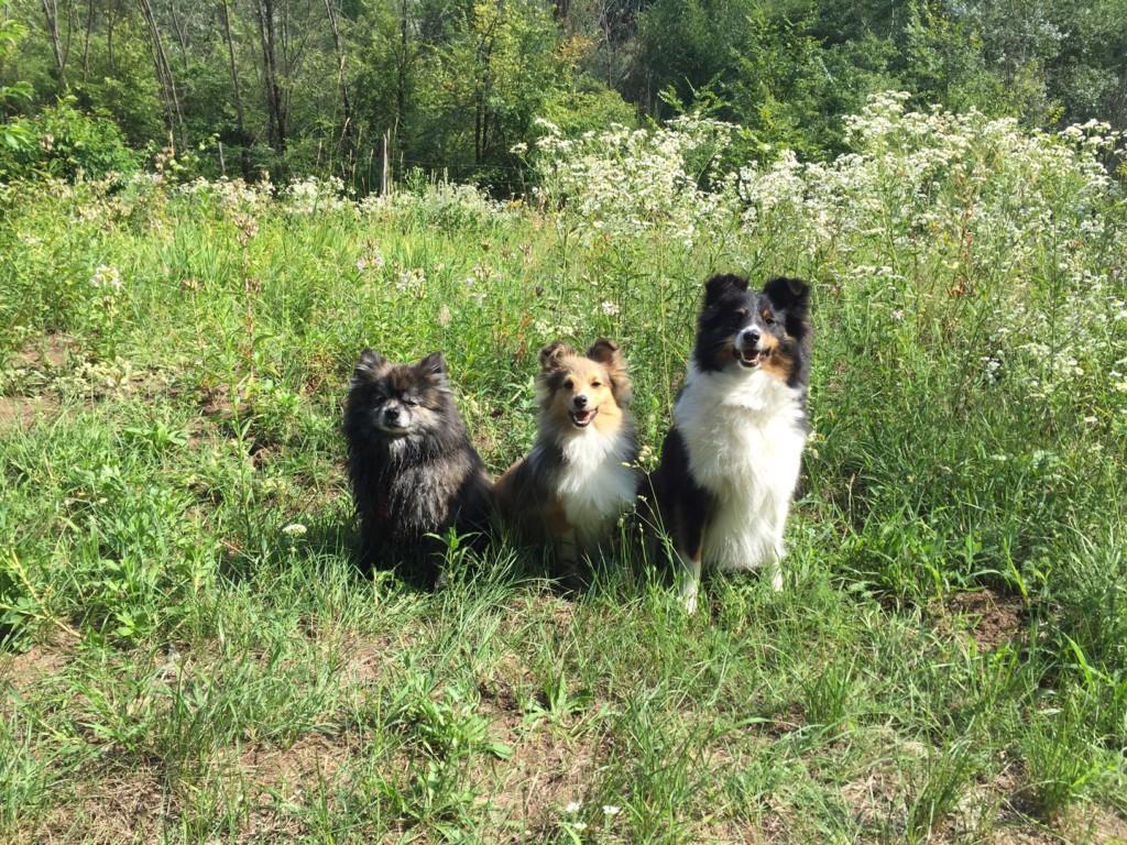Chewie mit Nelly und Marie