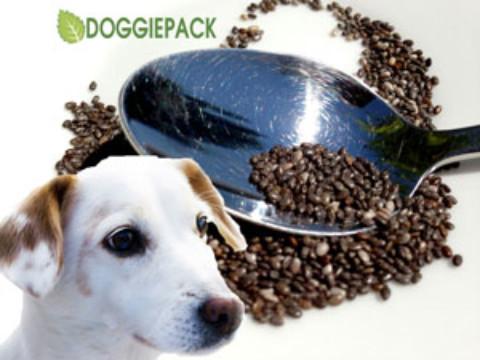 Chia-Samen: gesund auch für Hunde