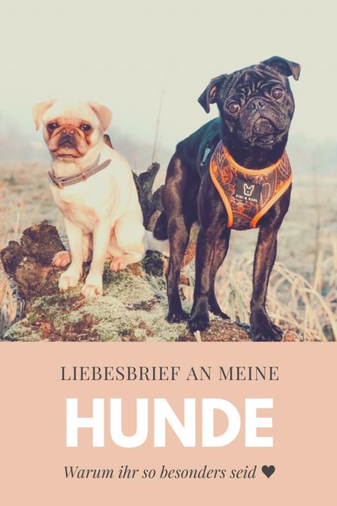 [Hundealltag] Blogparade: Liebesbrief an meine Hunde
