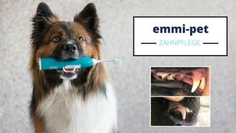 Zahnpflege mit der emmi-pet Ultraschallzahnbürste | Test