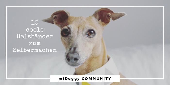 Coole Hunde halsband Halsbaender zum Selbermachen selber nähen