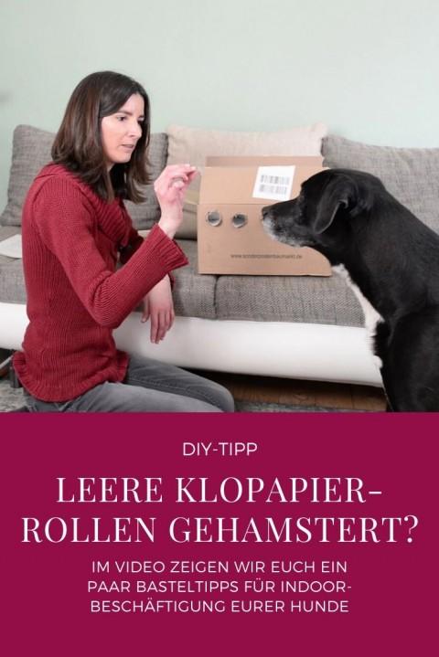 Indoor-Beschäftigung für deinen Hund mit leeren Klopapier-Rollen