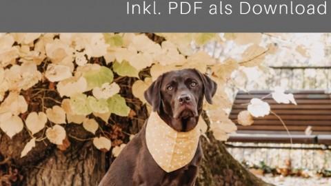 Erste Hilfe Set und Hausapotheke für Hunde