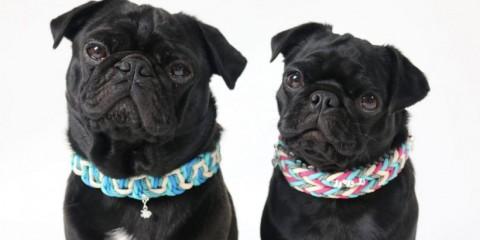 (Anzeige) Hundehalsbänder aus Paracord