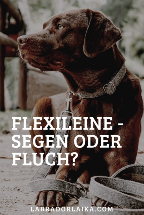 Flexileine -Segen oder Fluch?