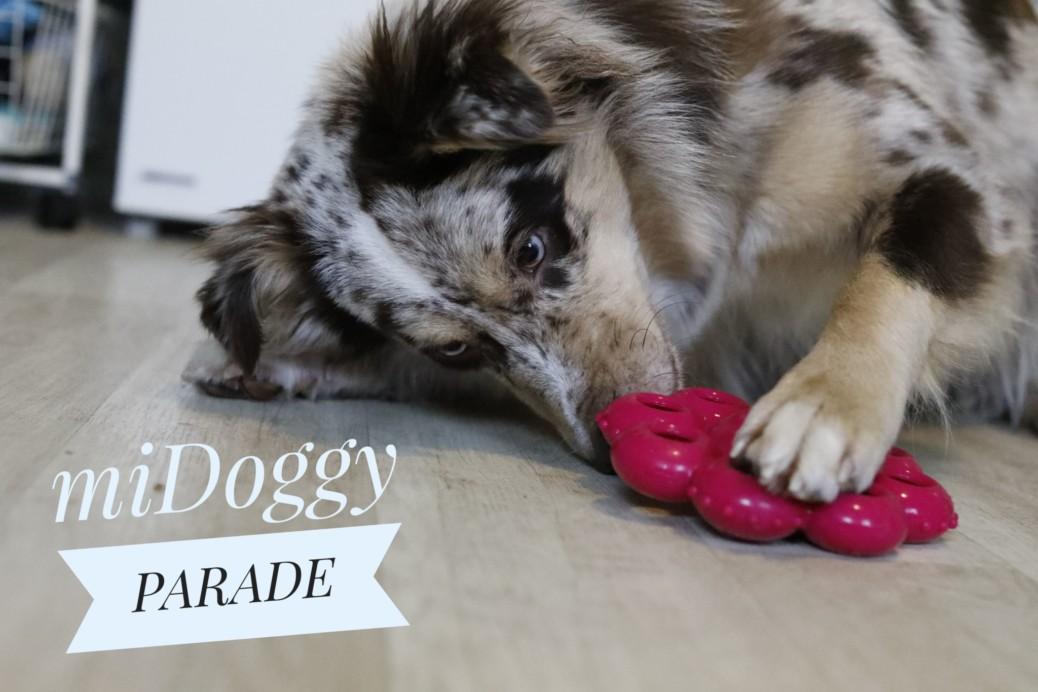 Beschäftigungsideen für den Hund