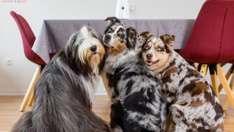Vom Stalken und Hundekeksregen – mit Furbo [Anzeige]