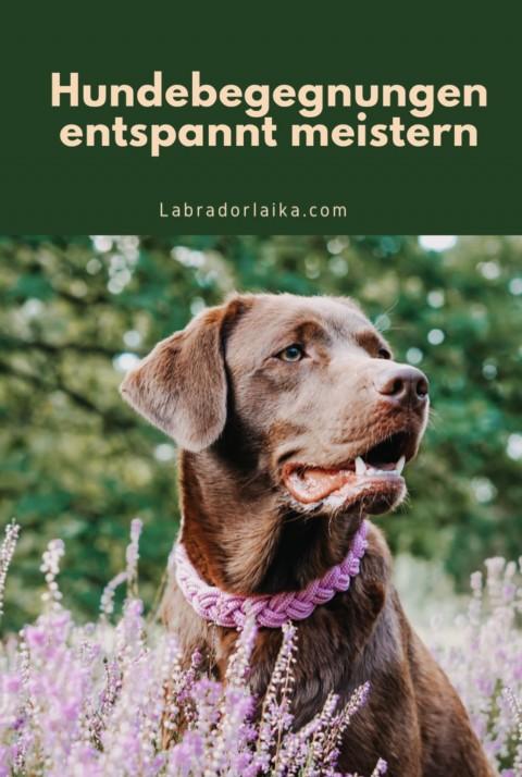 Hundebegegnungen entspannt meistern