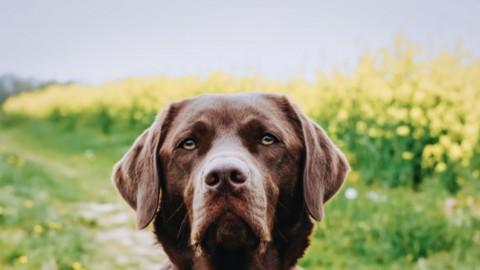 Die Suche nach der richtigen Hundeschule – darauf solltest du achten