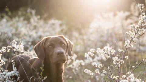 Markieren, Einweisen und Suchen- Dummytraining für Hunde