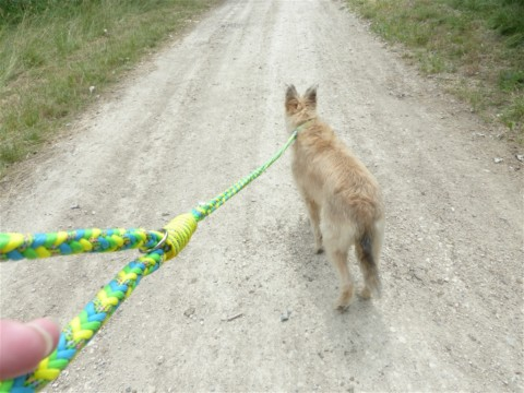 DIY – Hundeleine aus Paracord