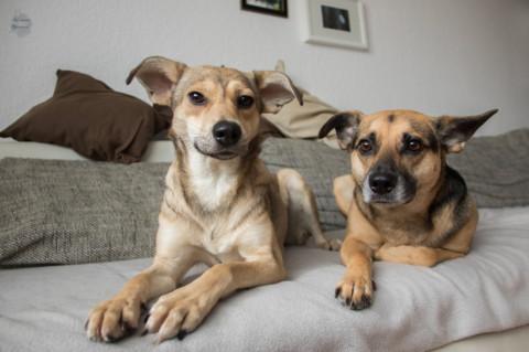 Wir feiern den Tag des Mischlingshundes
