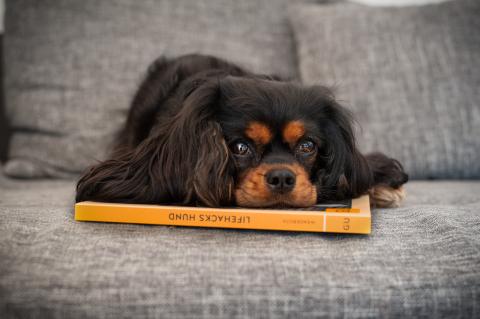 Lifehacks für den Alltag mit Hund [Anzeige]