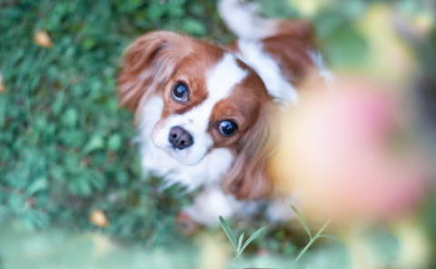 Umzug & Renovieren mit Hund – So klappt es (beinahe) stressfrei