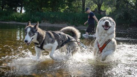 Anzeichen für Hyperaktivität bei Hunden