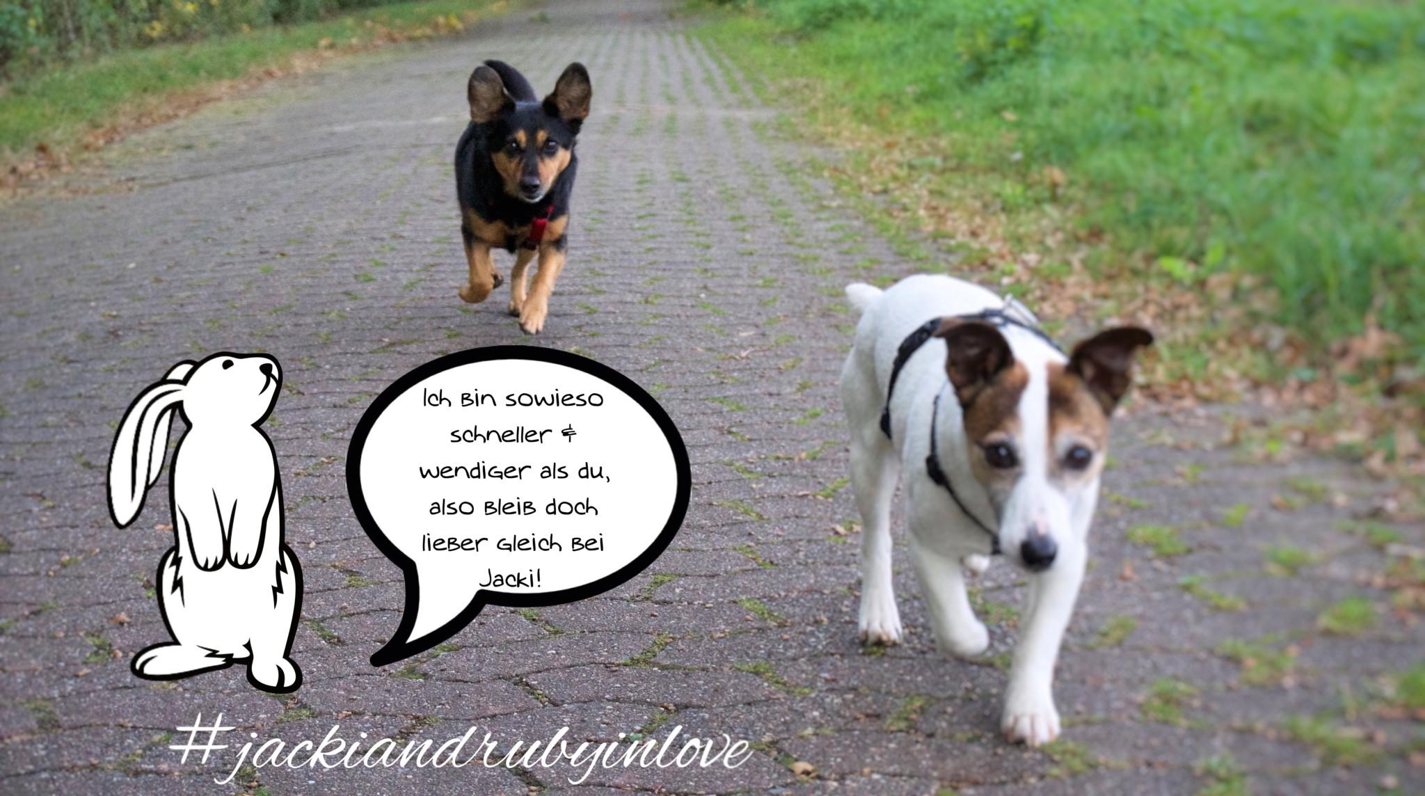 Hund entlaufen