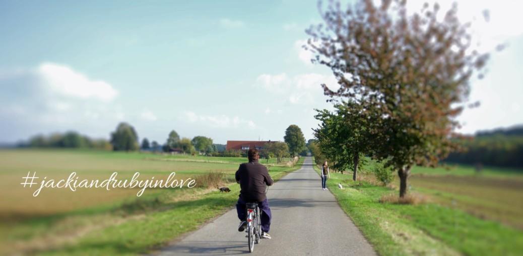 Fahrradfahrer und Hunde