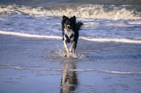 Urlaub mit Hund – Noordwijk / Südholland