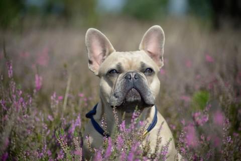 Ein Hund hört besser als zwei