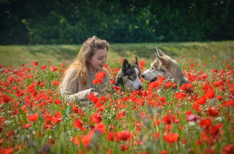 Unterschied zwischen Hundetrainer und Verhaltensberater