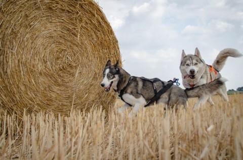 Mobbing unter Hunde – und warum meine nicht mit jedem Hund spielen dürfen