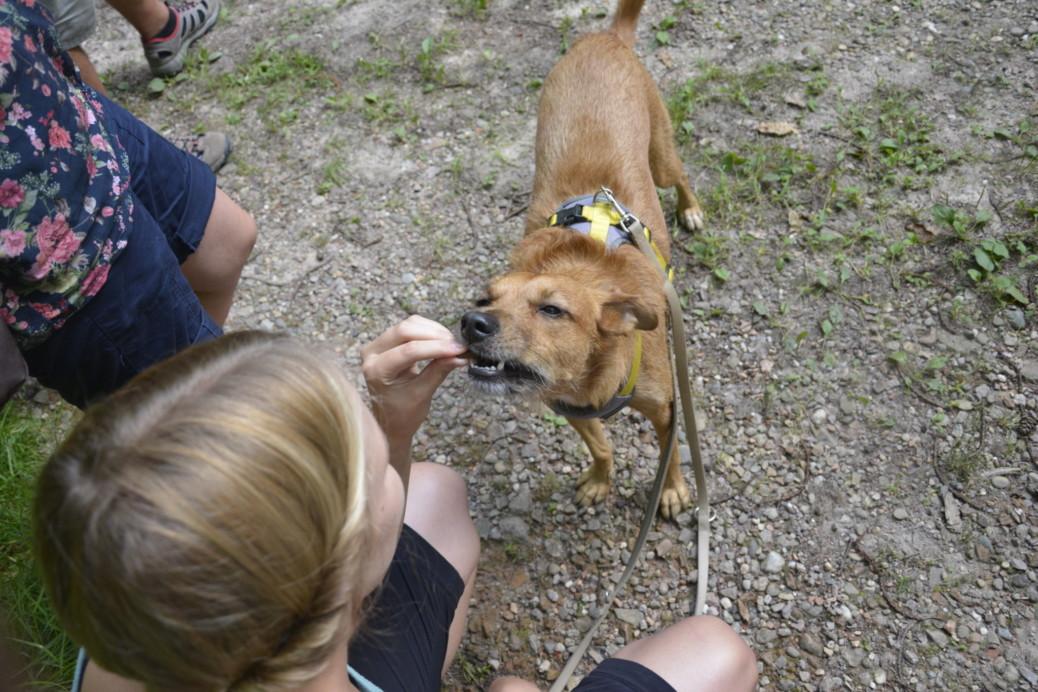 Hundetrainerin werden Leben verändern